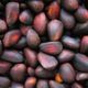 Продам кедровый орех из Сибири
