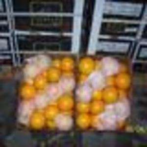 Предлагаю апельсин W.Navel из Аргентины